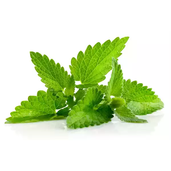 Mint Leaves (Pudina Pata)- 50 gm