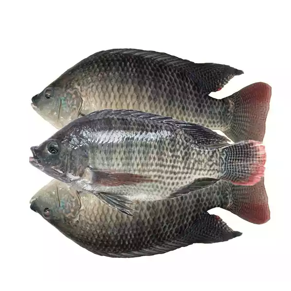 Telapia Fish (Medium) (1 kg)