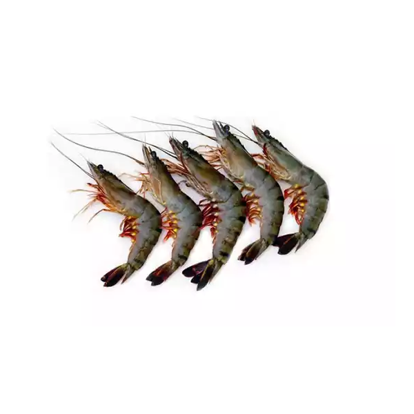 Prawn Small (Chingri)- 500 gm