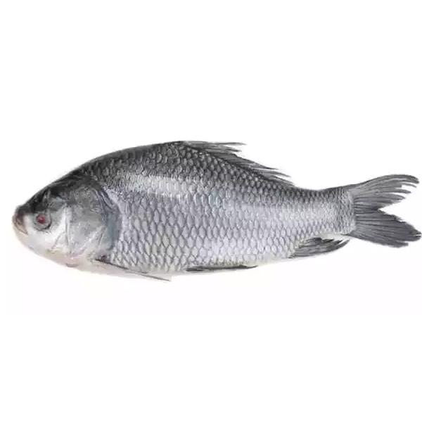 Catla (Katla) Fish (per KG)