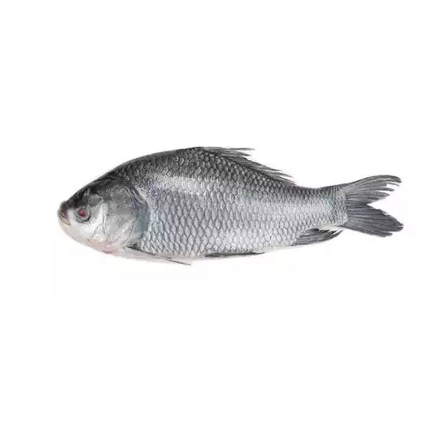 Catla (Katla) Fish- Medium