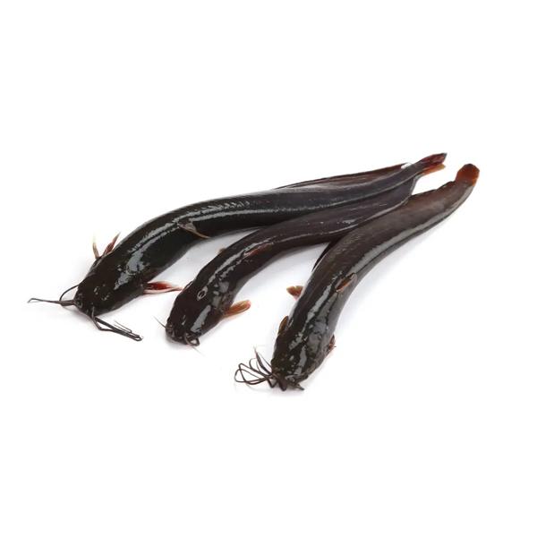 Shing Fish (Medium) 500 gm