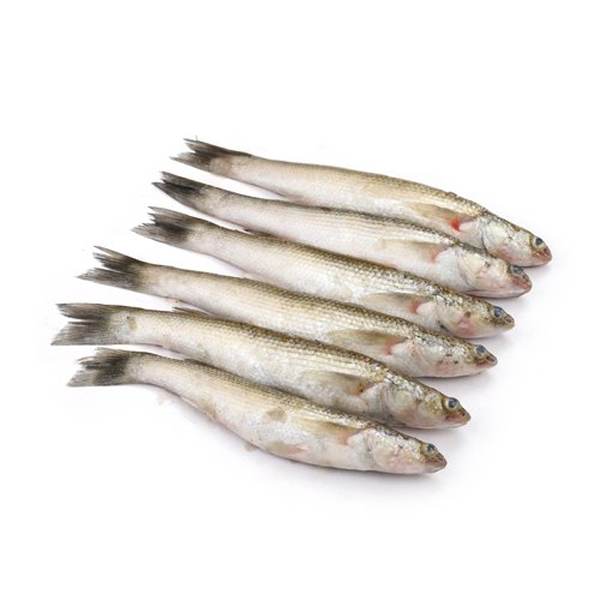 Bata Fish  (500 gm)