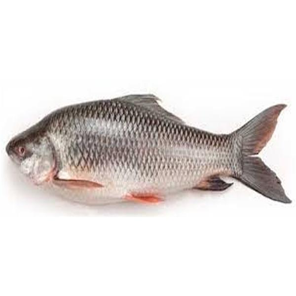 Rui Fish- Big (per KG )