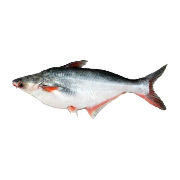 Krishibid Pangas Fish (size: 1 kg+) (Per KG)