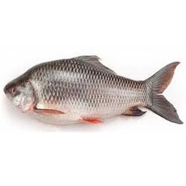 Rui Fish ( Medium ) (per KG )