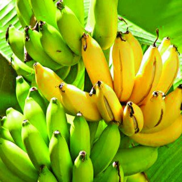 Deshi Kobri Banana (12 Pcs )