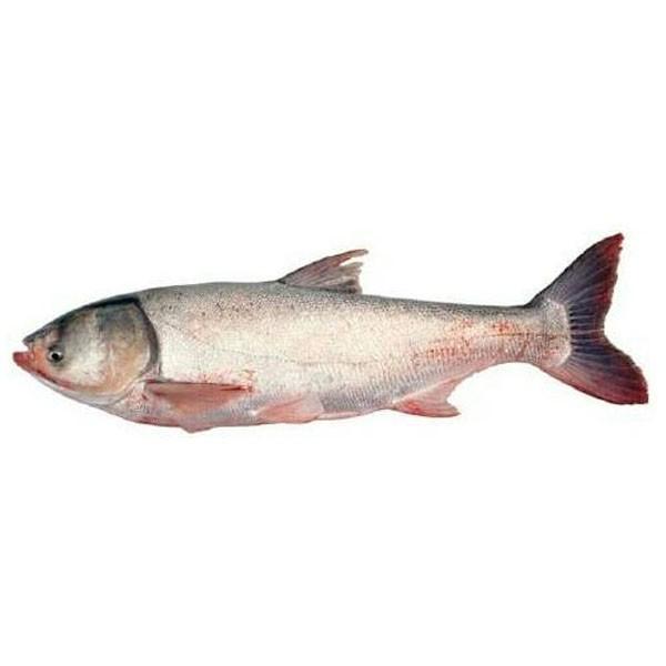 Silver carp ( 1 kg )