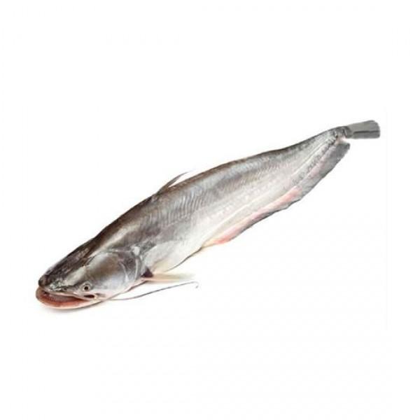 Boal Fish (per Kg) ( 1.5 Kg - 2 Kg Size)
